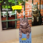 岩合光昭さん 世界ネコ歩き 大丸